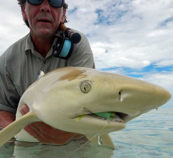 Fly Fishing for Shark