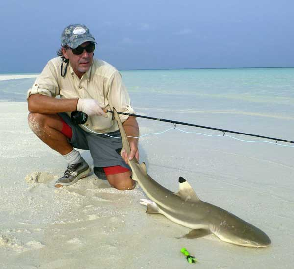 Shark on Fly